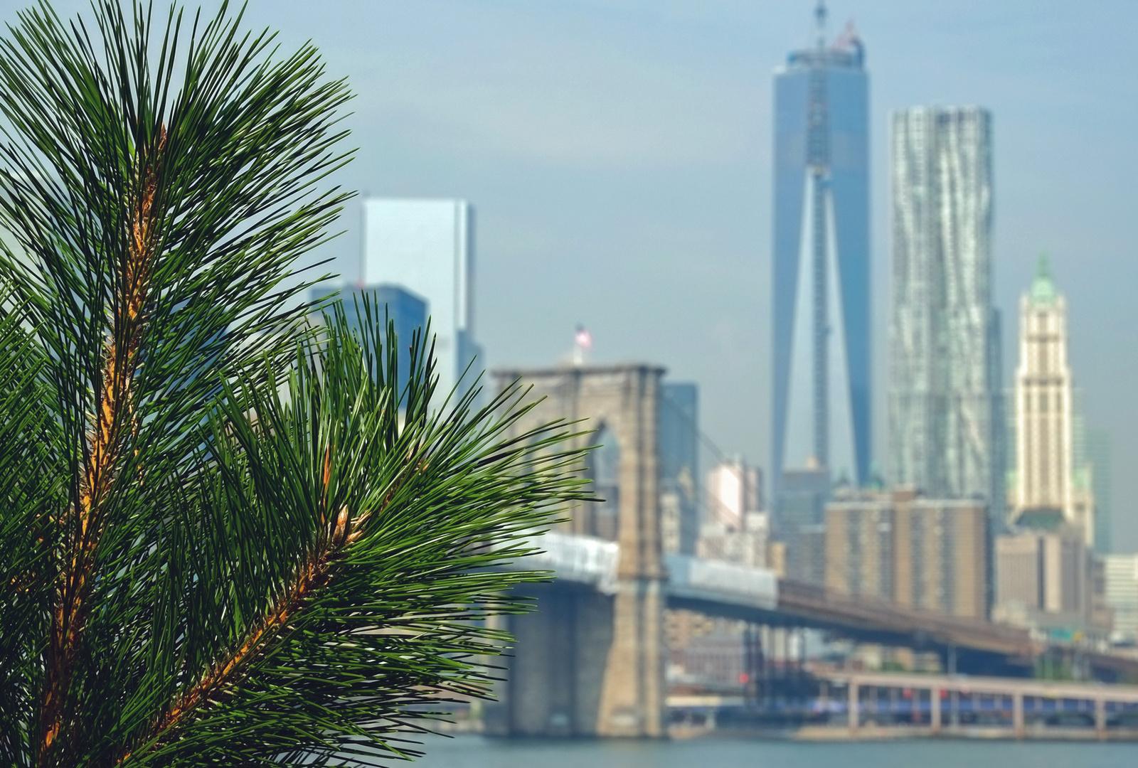 Blick von DUMBO nach Manhattan