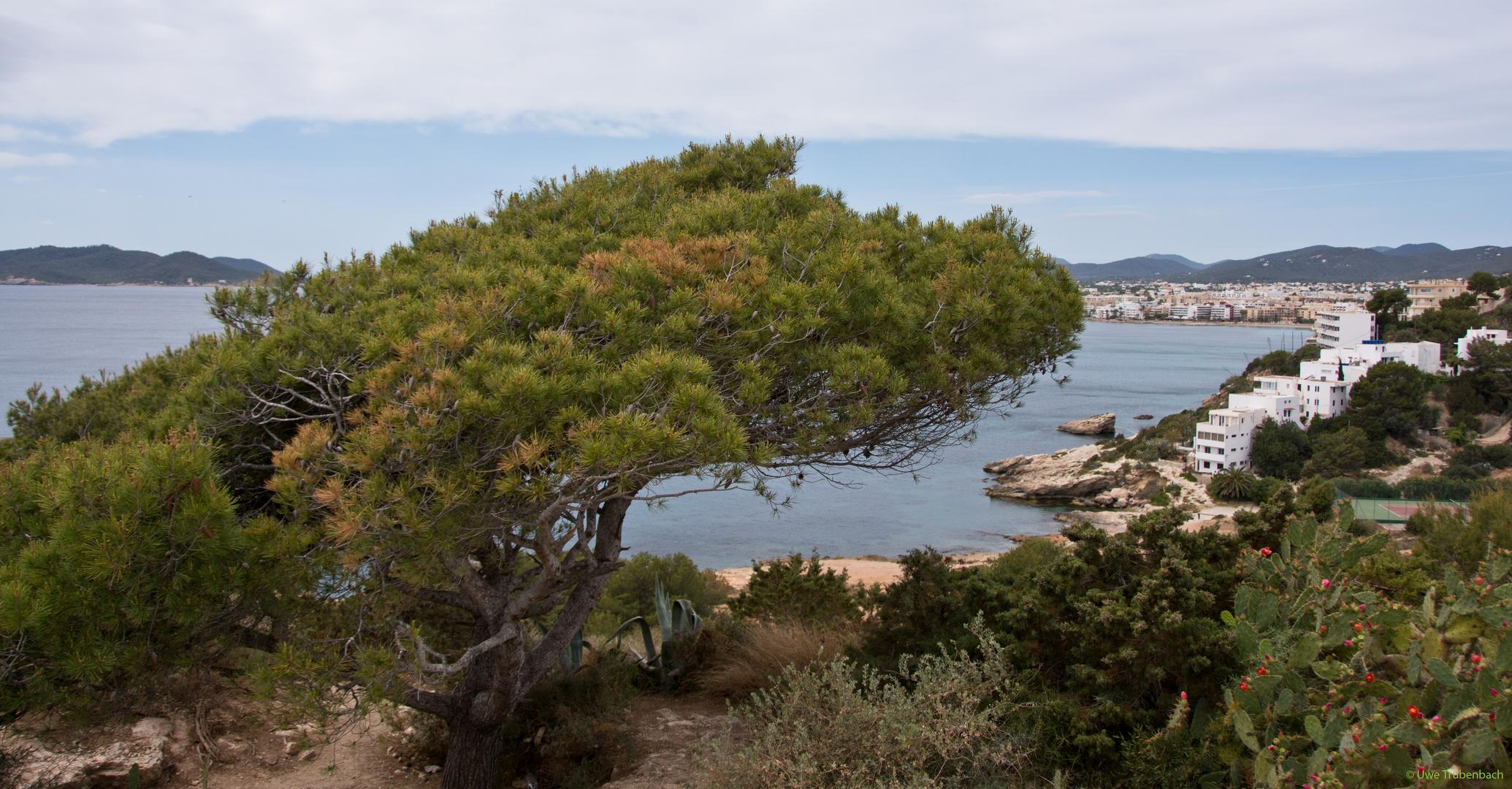 Blick von Es Soto auf die Bucht von Figueretas