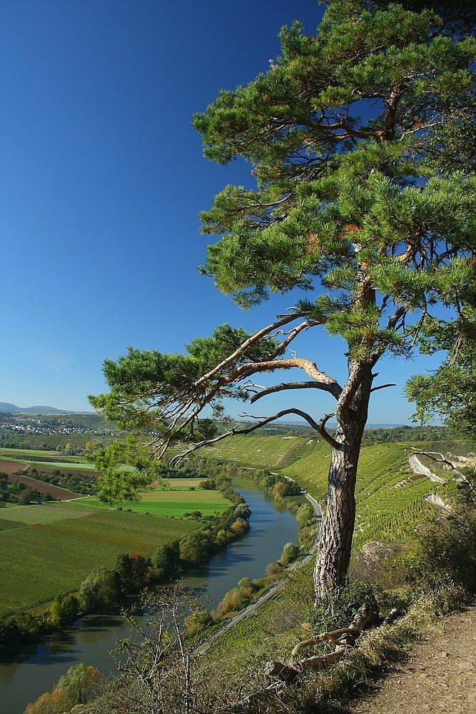 Blick von Hessigheimer Weinberge, Felsengarten