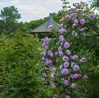 Blick zum Rosenpavillon