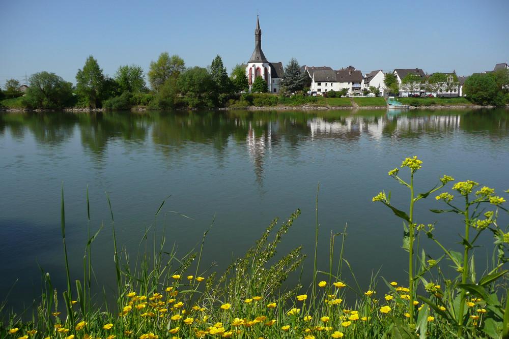 Blick zur Insel Niederwerth (einzige Insel im Rhein mit einer Dorfgemeinde)