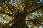 Blicke in einen Baum