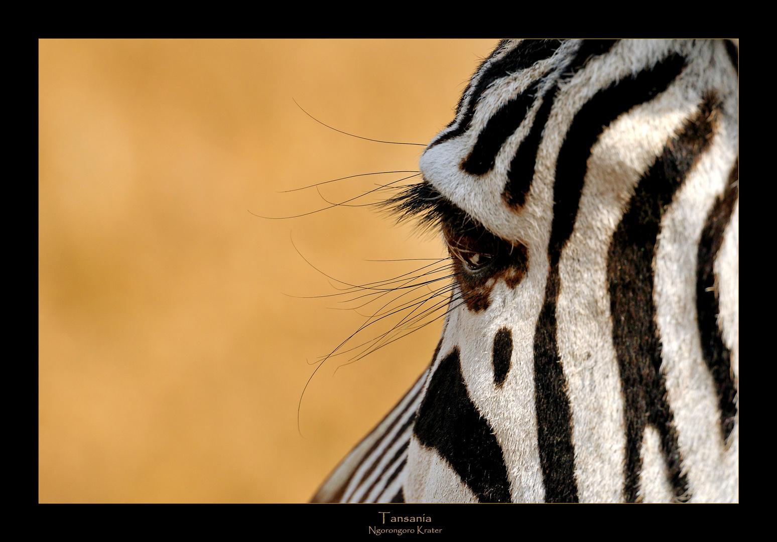 - Blink of zebra eye -