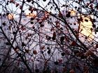 blocks in autumn