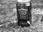 Blödsinn Der Jack im Wald