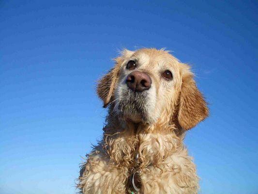 Blonder Hund ganz nass...