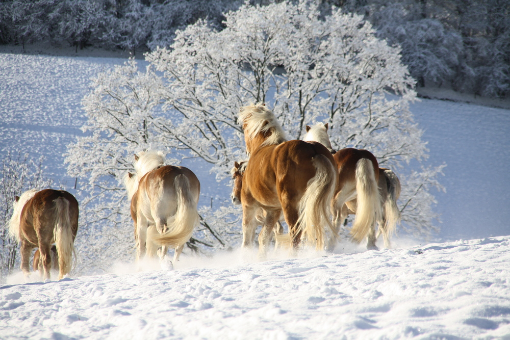 Blondis im Schnee