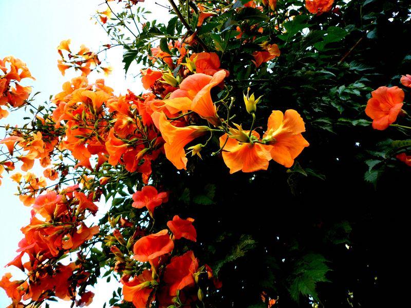 Bloomen
