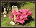 Blooming stone - Azalea