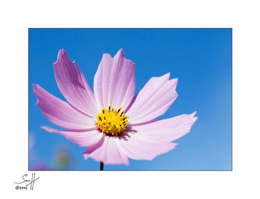 bloomy #01#