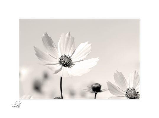 bloomy #03#