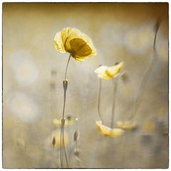 bloomy times 02