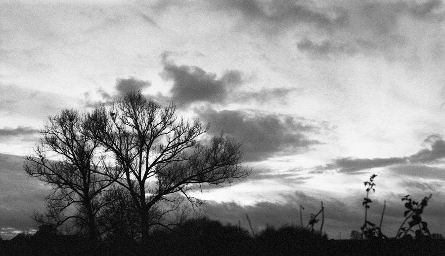bloß ´n Baum...
