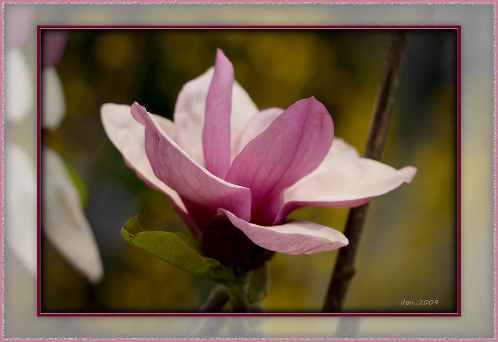 Blossom......