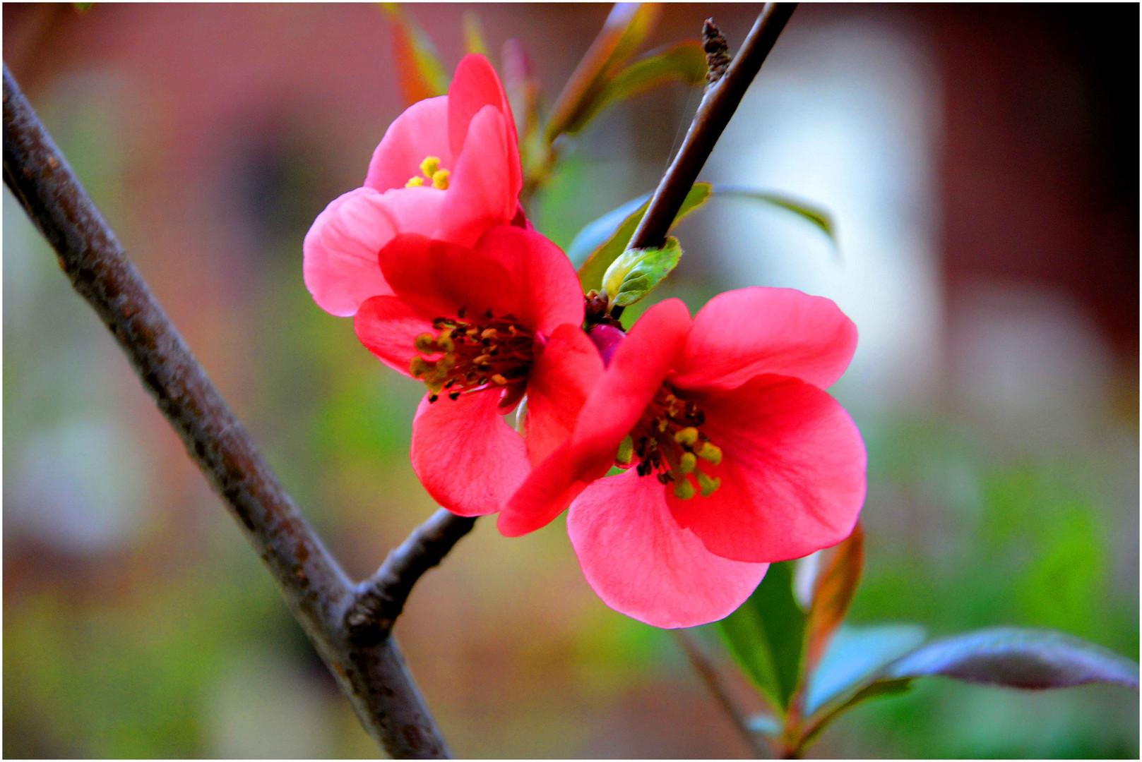 """blossoms.."""