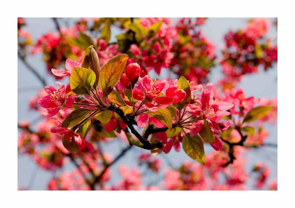 *blossoms*