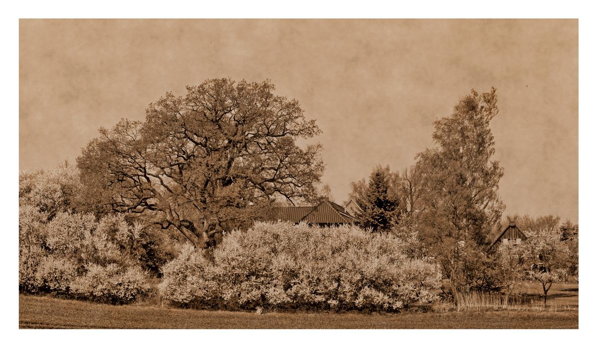 --- BlossomWall ---
