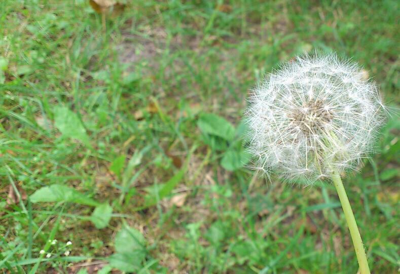 ~ Blowball ~