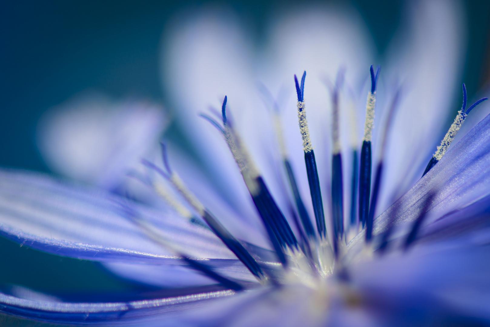 -blue-