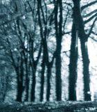 Blue blurry trees