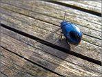 Blue Bug Shadow