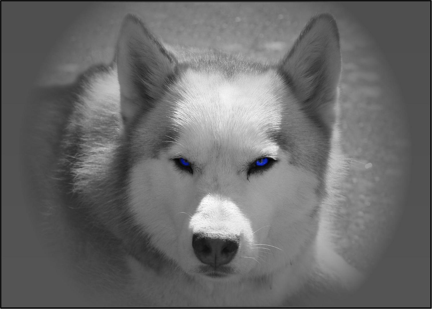 ...Blue-Eye.......