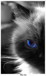 *Blue Eye*