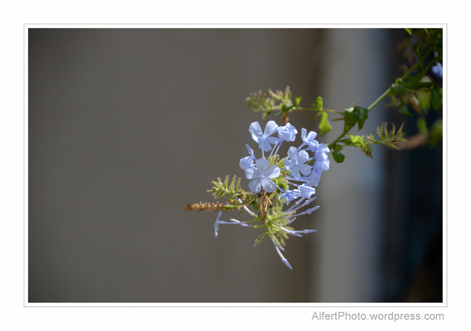 Blue flower in the sun