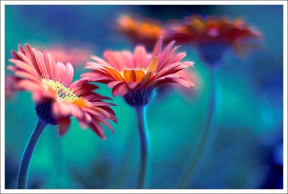 BLUE & FLOWERS