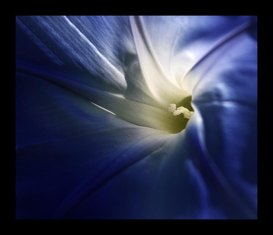 blue + light