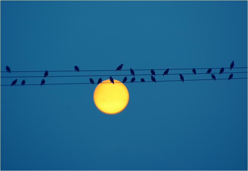Blue Melodie