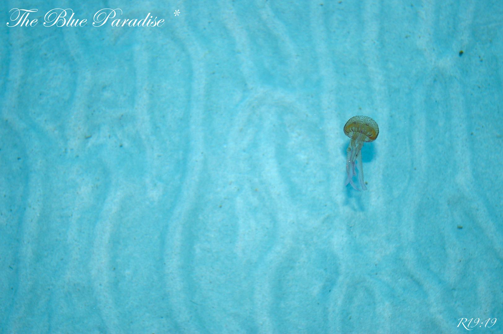 Blue Paradise *