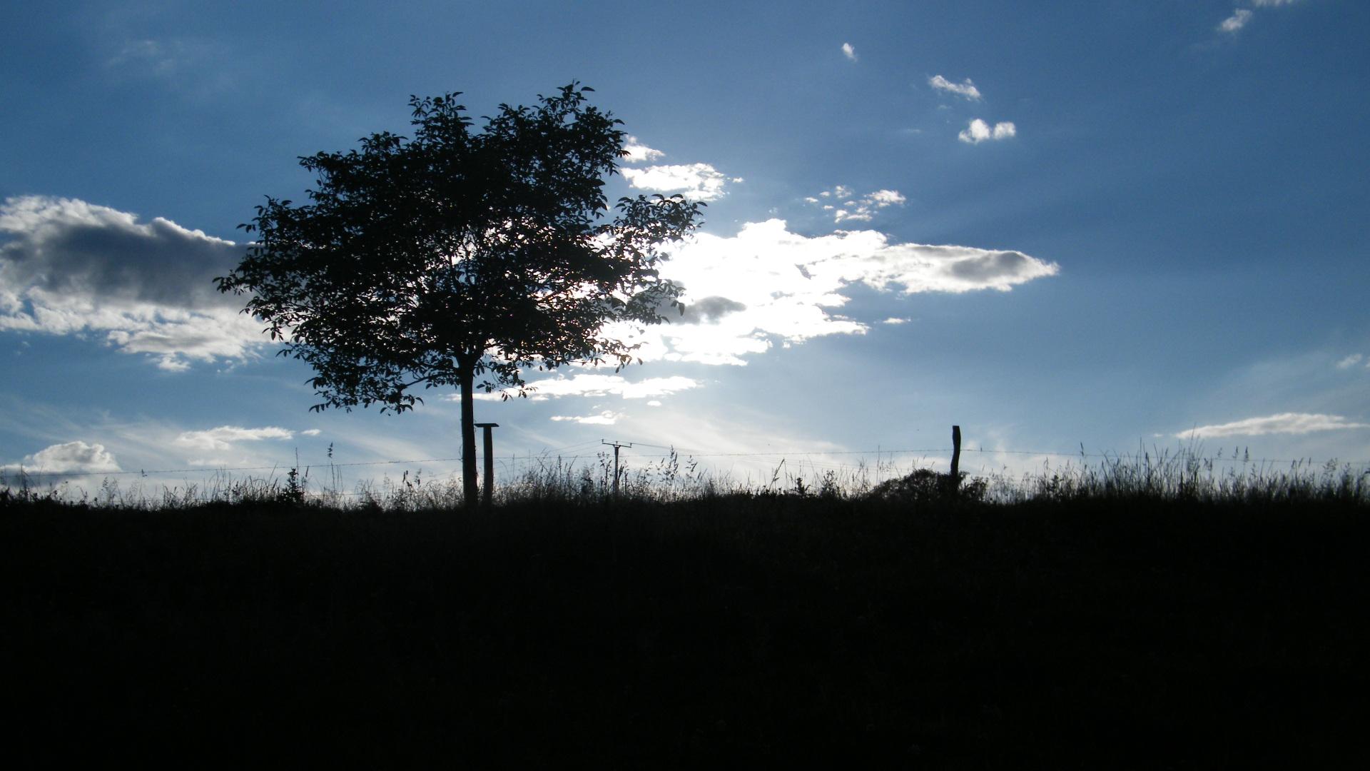 Blue Sky & Black Tree