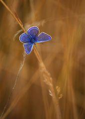 ....blue spot....
