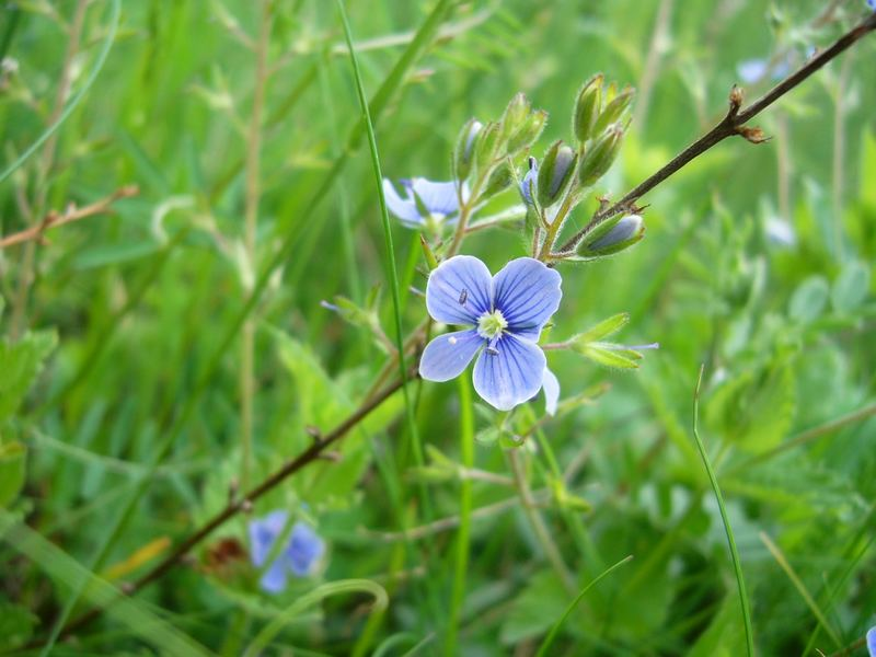 blue tenderness