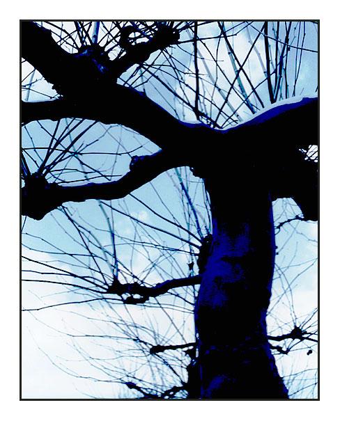 -blue tree-