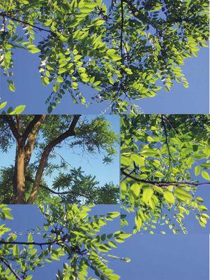 blue tree & green sky