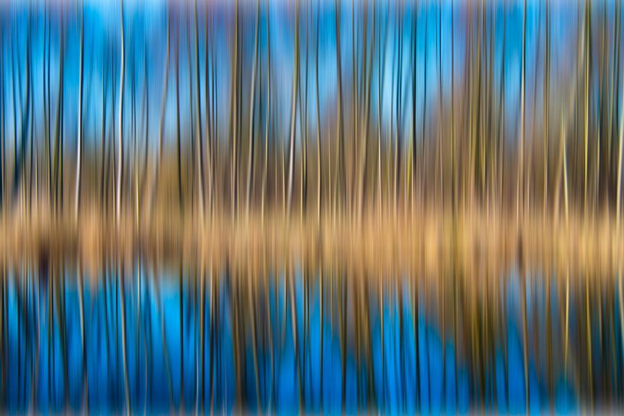 ... blue trees ...
