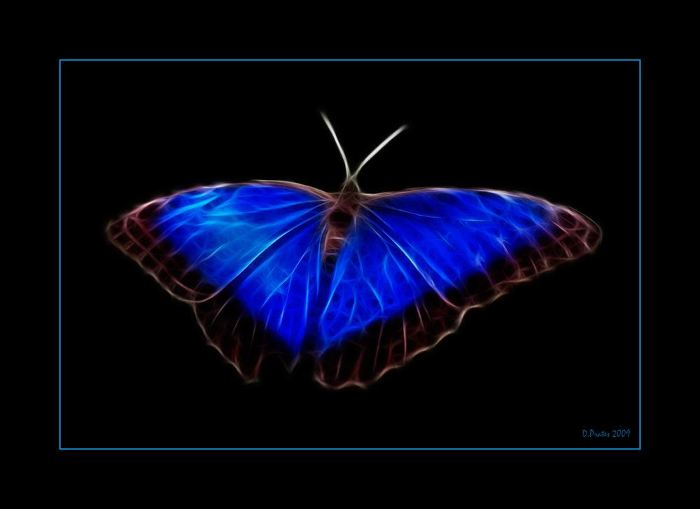- Blue Wings -