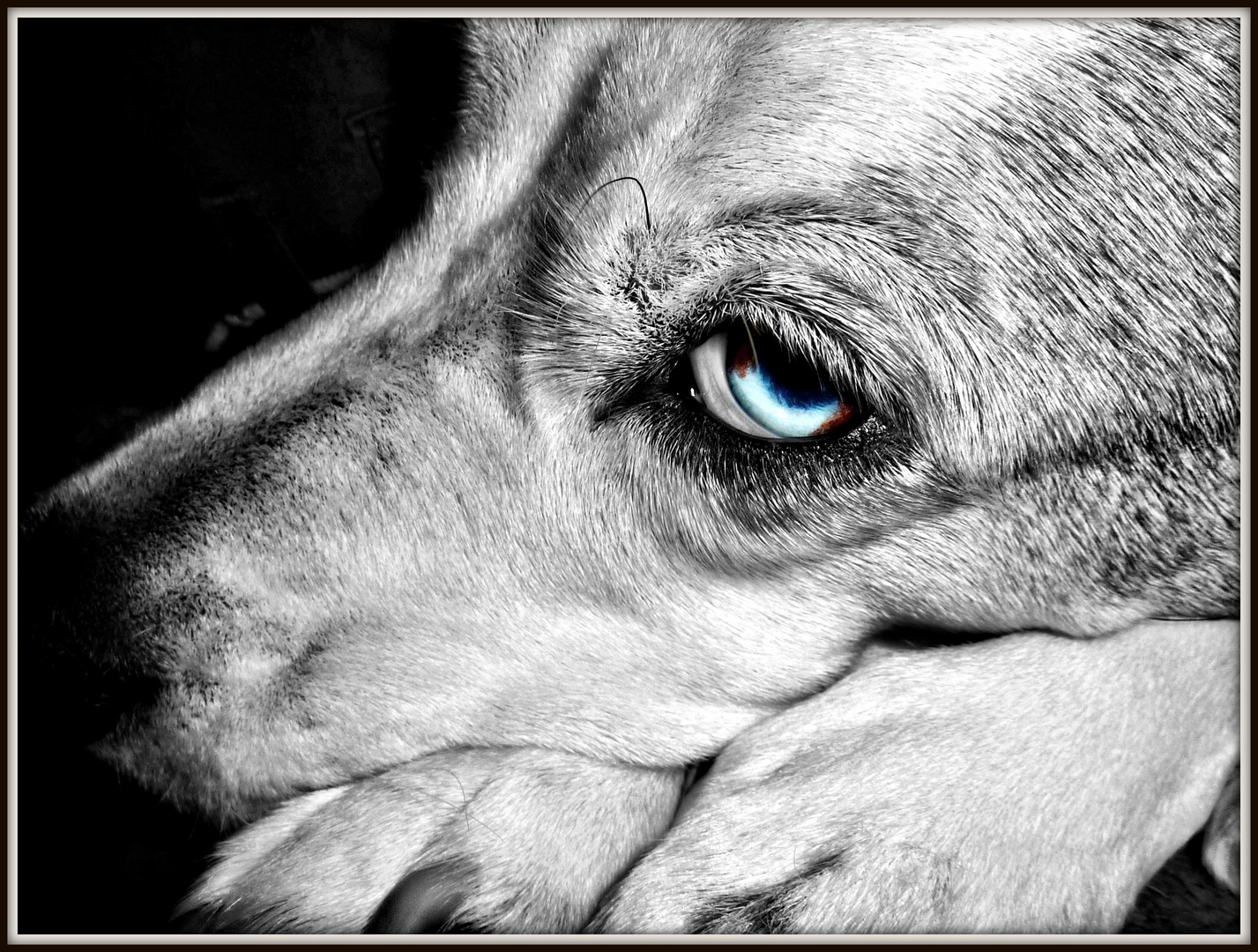 .blue.eyed.coffin.