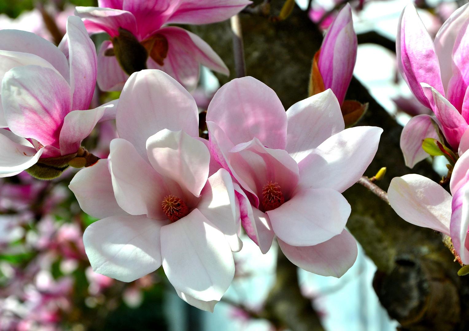 Blühe auf, Frühling