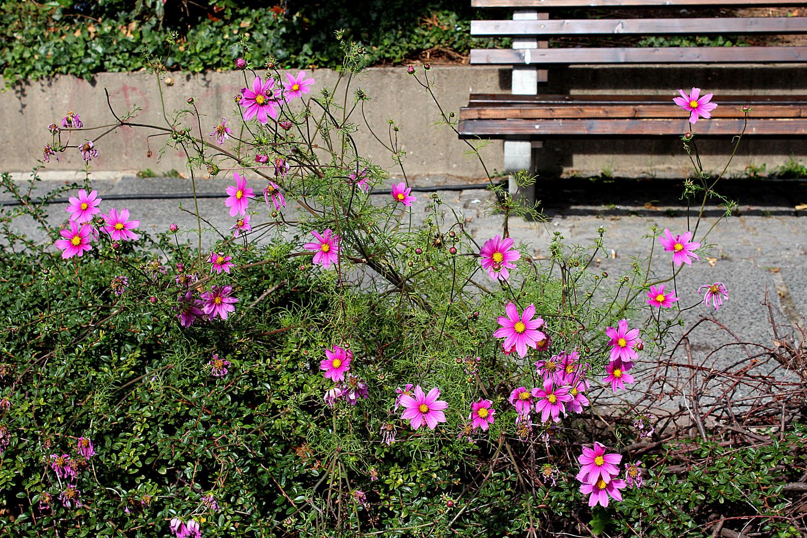 Blühen gegen die Tristesse