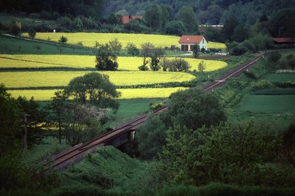 Blühende (Bahn)Landschaft