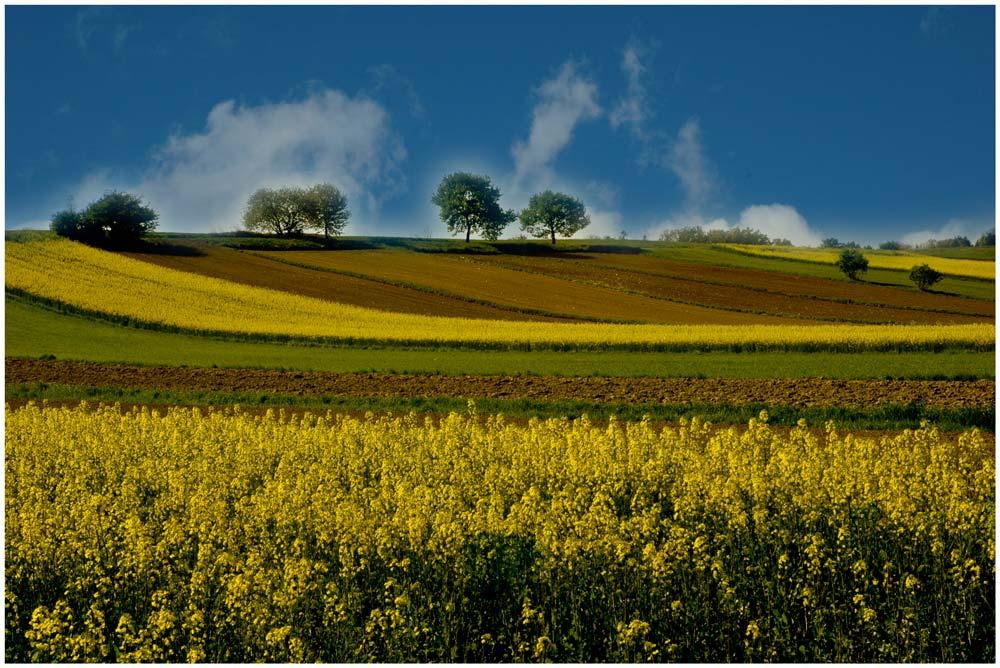 Blühende Felder