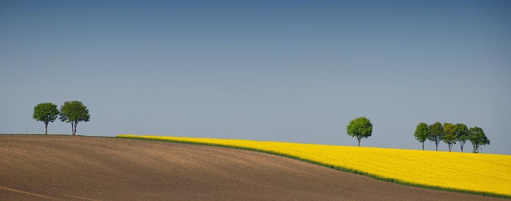 Blühende Felder (II)