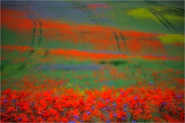 Blühende Landschaften ...