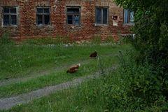 Blühende Landschaften und pickende Hühner