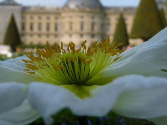 Blühende Residenz