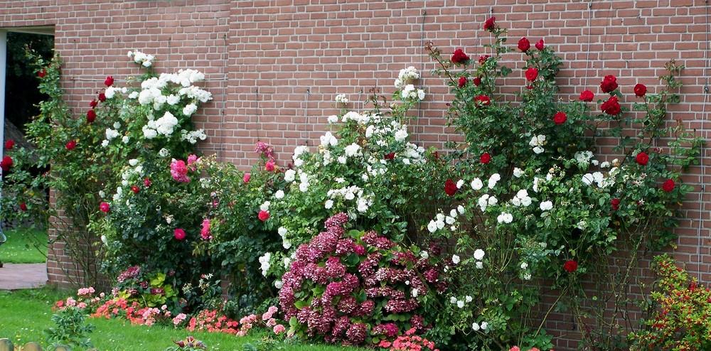 Blühende Rosengärten