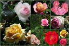 blühende Rosenpracht...